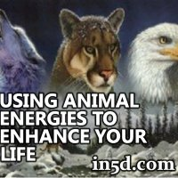 Using Animal Energies to Enhance Your Life