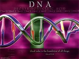 December 21, 2012: DNA Upgrade and ascension