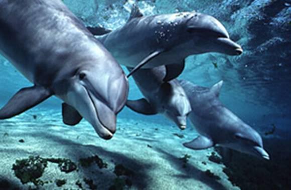 http://www.in5d.com/images/dolphins-bottlenose1dth.jpg