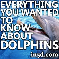 Everything You Wanted to Know About Dolphins | in5d.com | Esoteric, Spiritual and Metaphysical Database