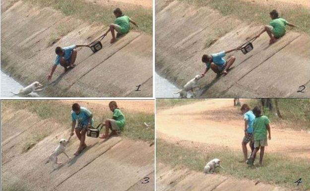 These photos of two children collaborating to rescue a dog who had fallen into a ravine.