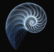 We all have one or more numeric codes that follow the blueprint of Sacred Geometry. It is about the spirals of consciousness, Fibonacci Numbers, the Golden Spiral, also found in perfection, in the exact proportions in the Great Pyramid .