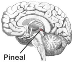 The Pineal Gland and Rotating, Holophonic and Binaural Merkaba Meditations!