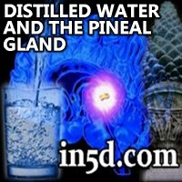 Andrew Norton Webber - Distilled Liquids and the Pineal Gland | www.in5d.com