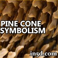 Pine Cone Symbolism | in5d.com | Esoteric, Spiritual and Metaphysical Database